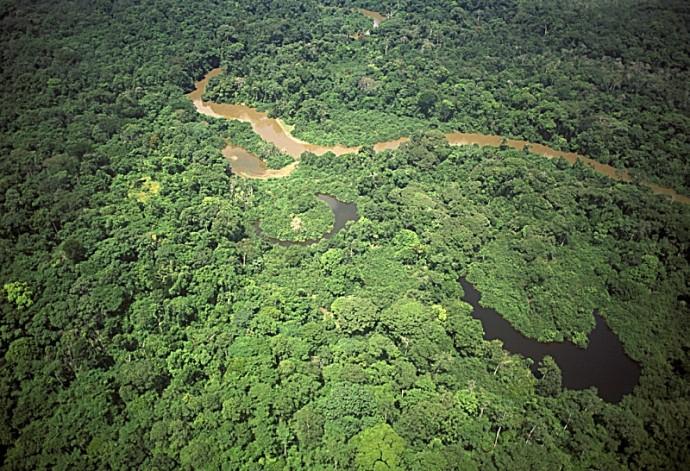 Préservation de la forêt : l'exemple gabonais