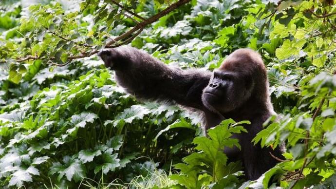 Rwanda : et si l'avenir appartenait au tourisme ?