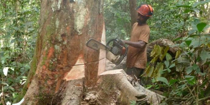 Appel au Boycott du commerce du bois illégal en RDC