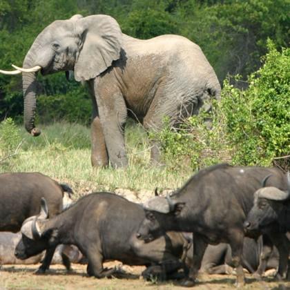 La RDC développe son potentiel touristique