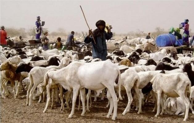 Tchad : quand le terrorisme fait chuter le prix du bétail