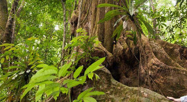 Le Gabon s'associe avec la NASA et l'ESA pour la surveillance de la biomasse