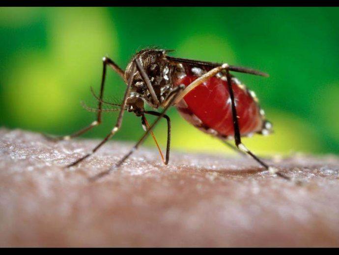 Campagne de vaccination « sans précédent » contre la fièvre jaune en RDC et en Angola