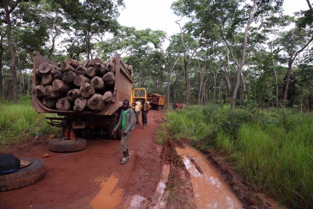 Halte au trafic de bois rouge dans le Haut-Katanga