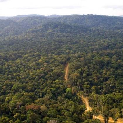 Le Bassin du Congo prêt pour le tourisme vert ?