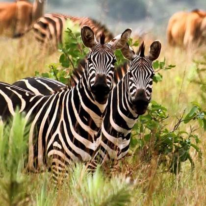 Le Rwanda mise sur le tourisme conférencier