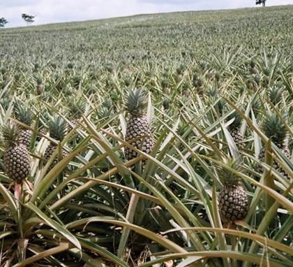 La BAD investit dans l'agriculture au Cameroun