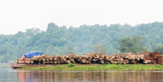 Annulation de contrats forestiers illégaux en RDC