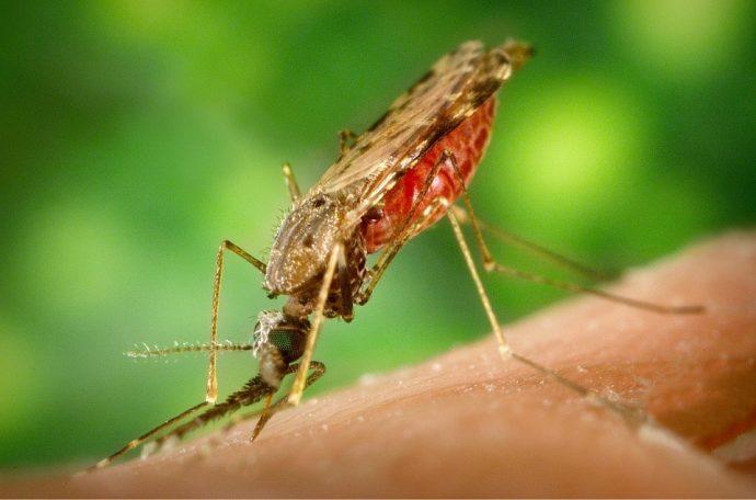 Épidémie de paludisme déclarée au Burundi