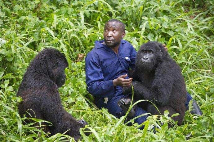 RDC : le parc des Virunga fermé jusqu'à la fin de l'année
