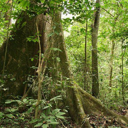 Le bois fait son show au Gabon