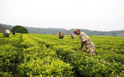 Cameroun : la BID débloque 34,6 milliards FCFA pour soutenir le développement l'agriculture