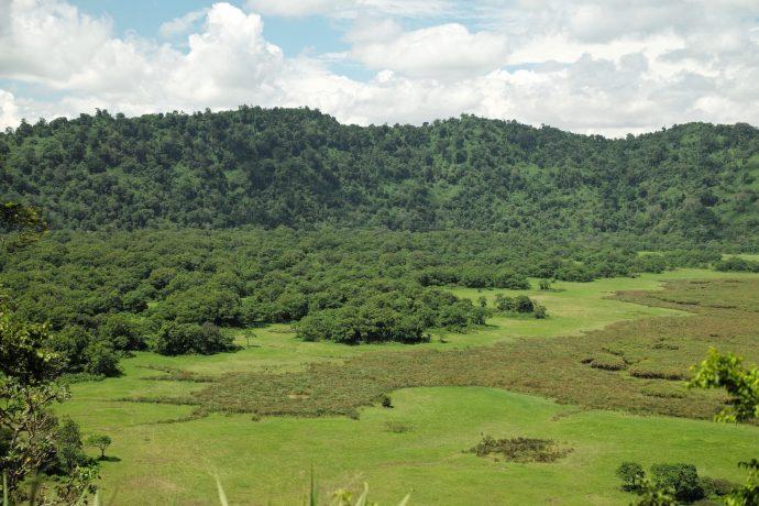 Incendies en Afrique centrale : une situation comparable à l'Amazonie ?