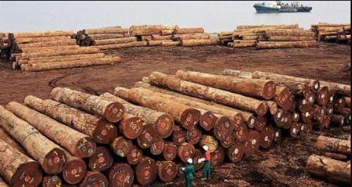 Le Port de Kribi (Cameroun) en mission de prospection en République centrafricaine