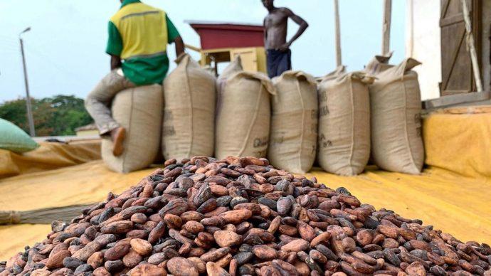 La sécheresse suscite des inquiétudes dans les régions cacaoyères de Côte d'Ivoire