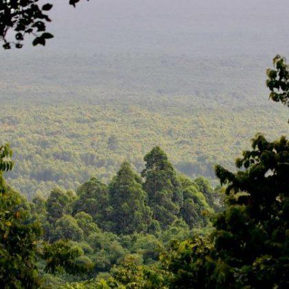 Le Gabon rejoint la coalition mondiale de préservation de la biodiversité