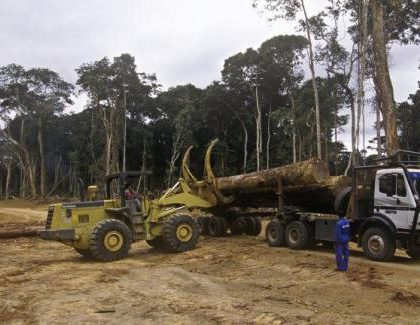 Le Gabon met le cap sur l'exploitation durable du bois