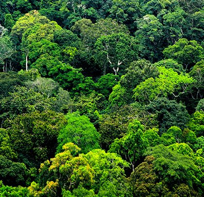 Le groupe énergétique français Total participe à la construction de la forêt en République du Congo