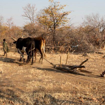 La faim s'aggrave en Angola en raison de la sécheresse