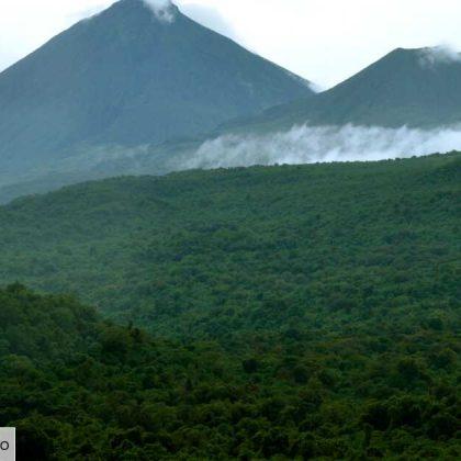 La RDC va auditer les concessions forestières et suspendre les « contrats douteux »